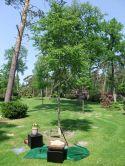 Baumbestattungen auf dem Sennefriedhof 1