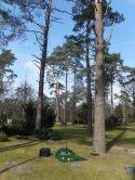 Baumbestattungen auf dem Sennefriedhof 2